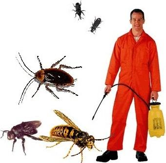 Scorpion Pest Control Services - Dhaka